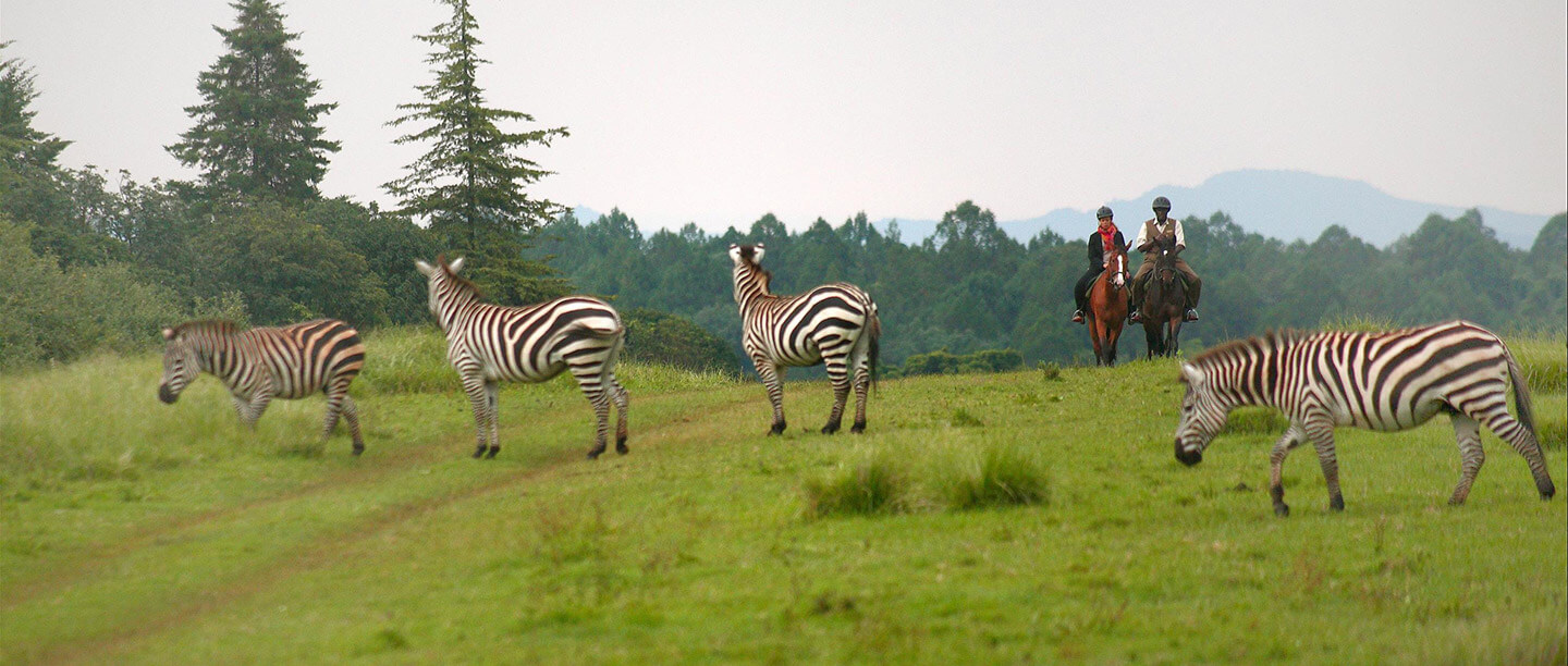 Fairmont Mount Kenya Safari Club - Kichaka Tours and Travel Kenya